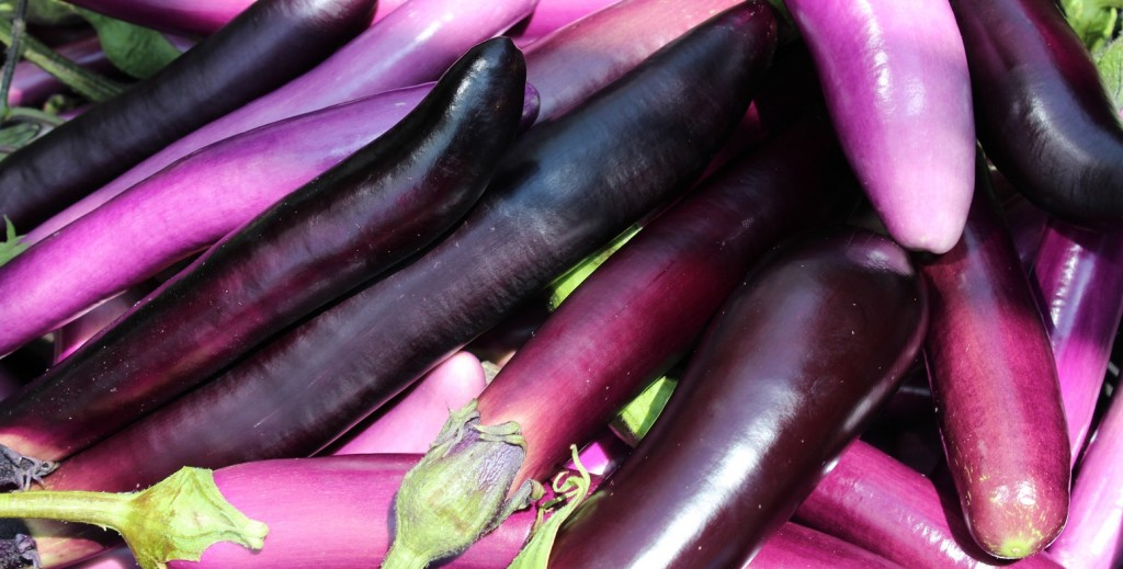 Canadian project aims for year-round ethnic eggplant production