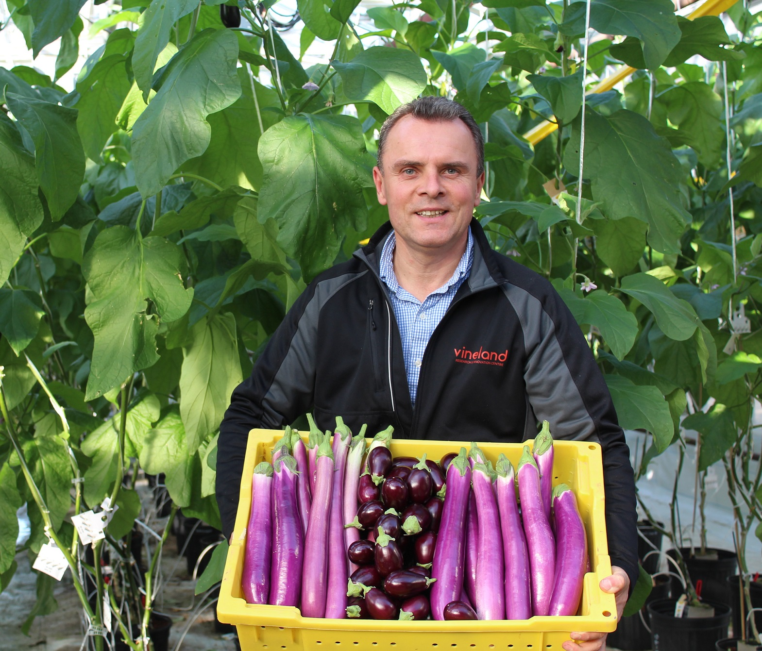 Dr. Viliam Zvalo with the Chinese long (left and right) and Indian round (center) eggplant varieties.