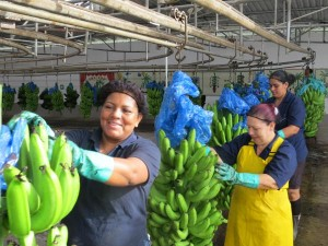 Employees from Platanera Río Sixaola