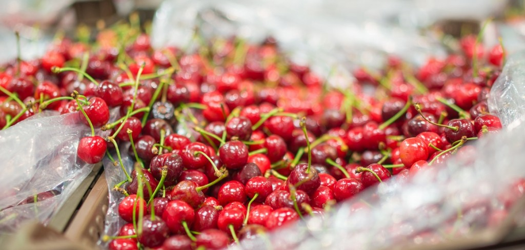 China: High demand gives rise to greenhouse cherries