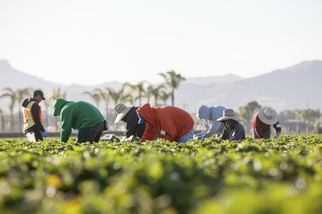U.S.: Western Growers board votes to oppose