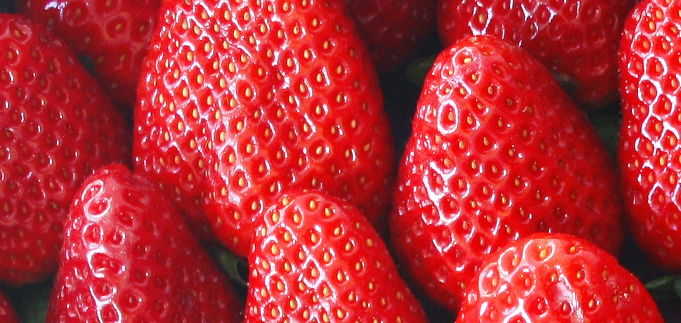 Research results: Nanobubbles increase strawberry yields by 14 percent
