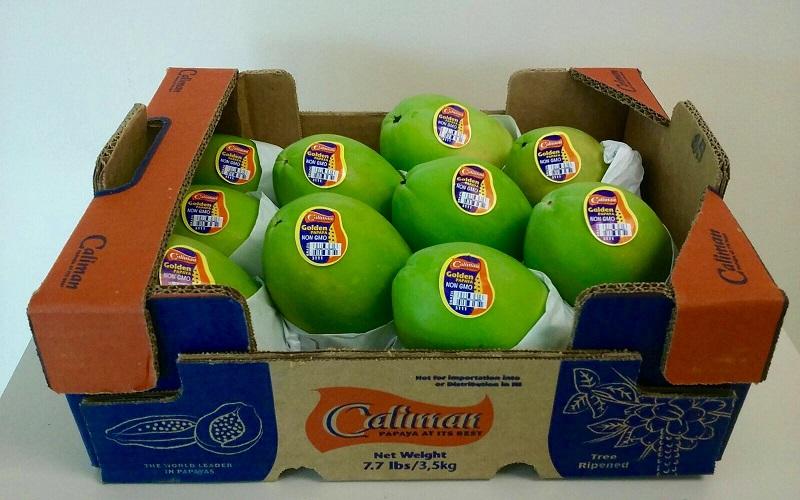 HLB papaya shortage 3