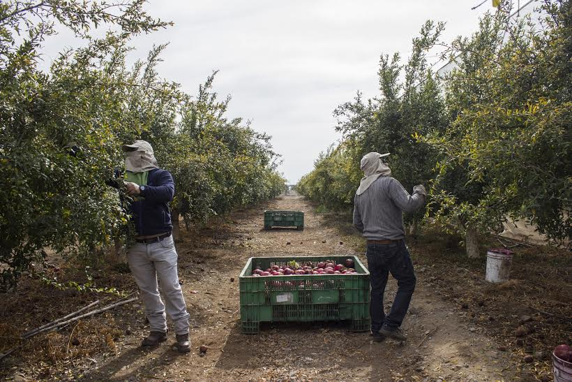 Peru: Farmworkers unblock northern highway amid anger over new bill