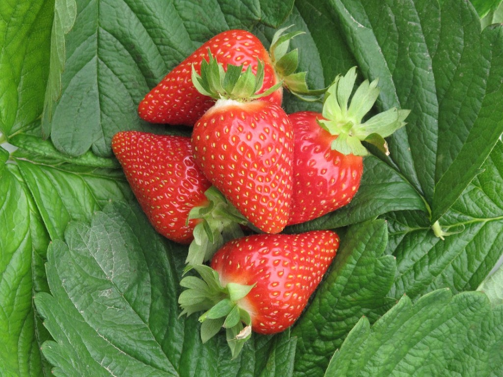 Strawberries in Charts: Lower production brings prices back to normal
