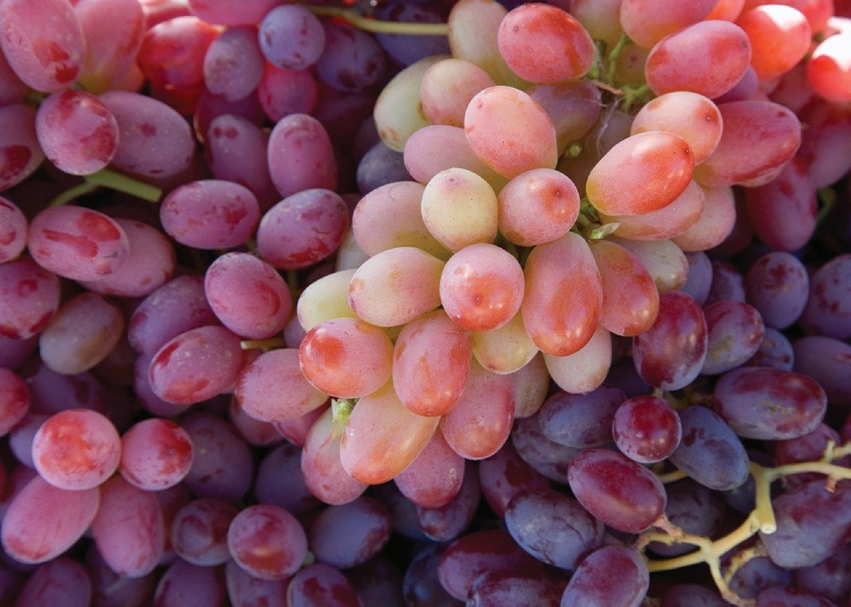 U.S. table grape production on track, pricing could change