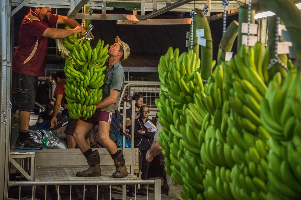 Aussie banana growers back increased levy