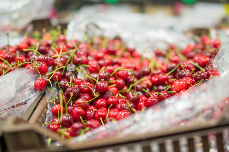 USDA forecasts volume rise for sweet cherry production