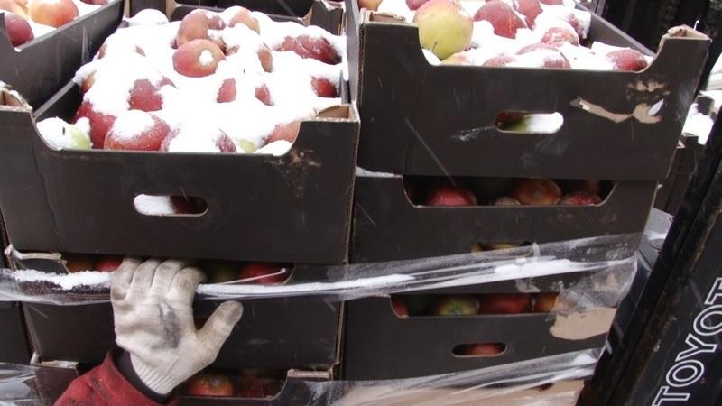 Russia intercepts, destroys 60MT of Polish apples