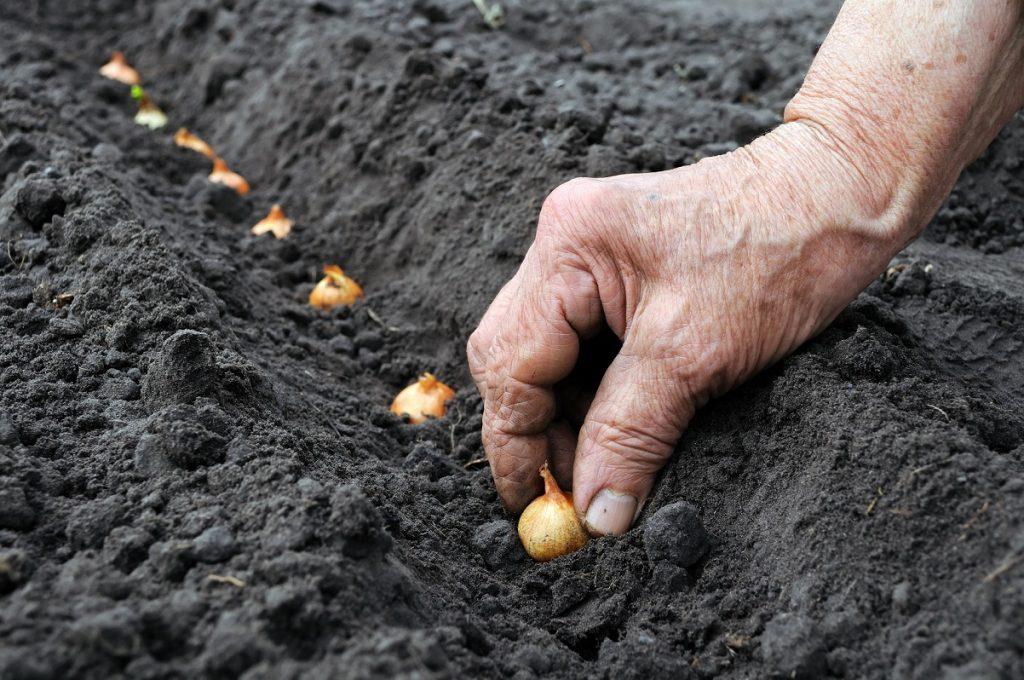 U.S. joins pioneering plant genetic resources treaty