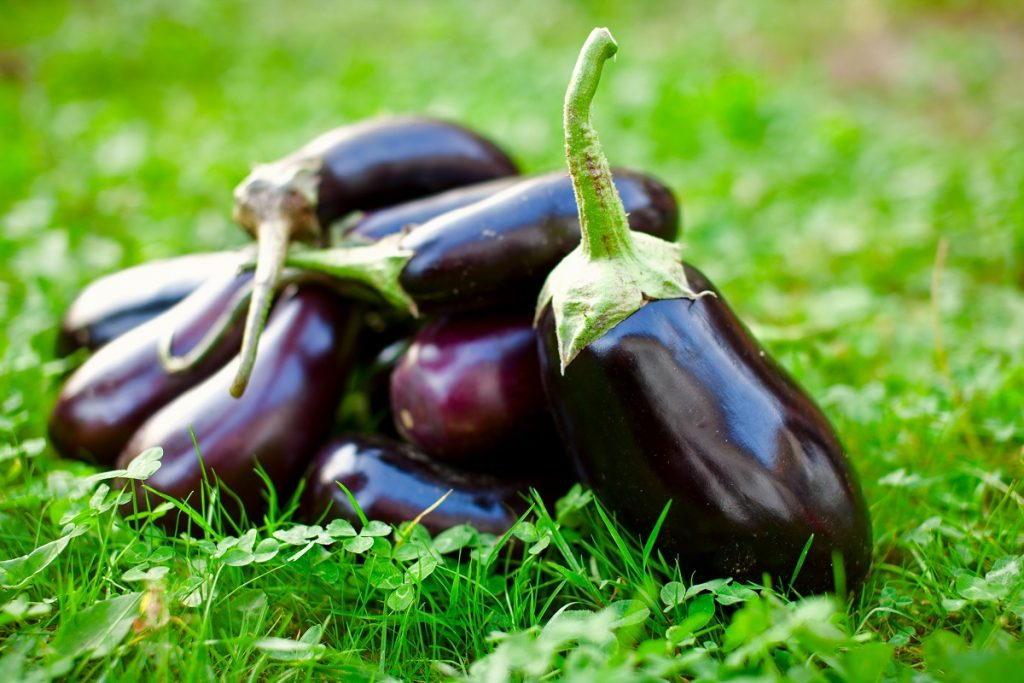 U.S. to potentially import eggplant from Morocco