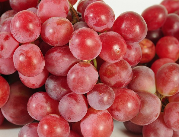 Peruvian grape exports started season with 11% growth
