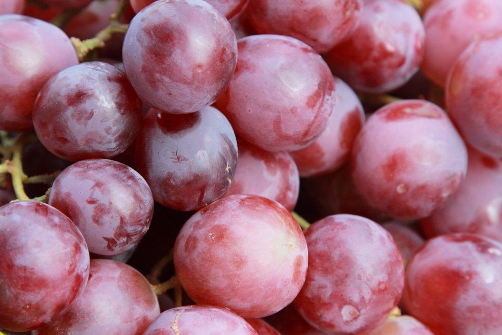 Agronometrics in Charts: A snapshot of Peru's previous grape seasons