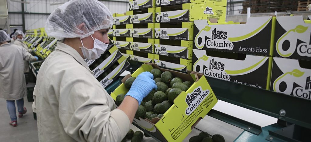 Colombia: CorpoHass outlines U.S. avocado export challenges ahead