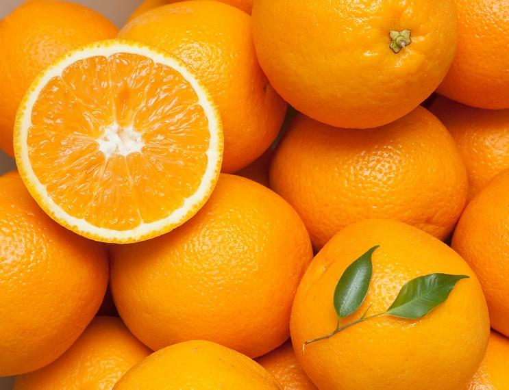 U.S.: South Florida citrus crop loss estimated at 50-70%, says FFVA