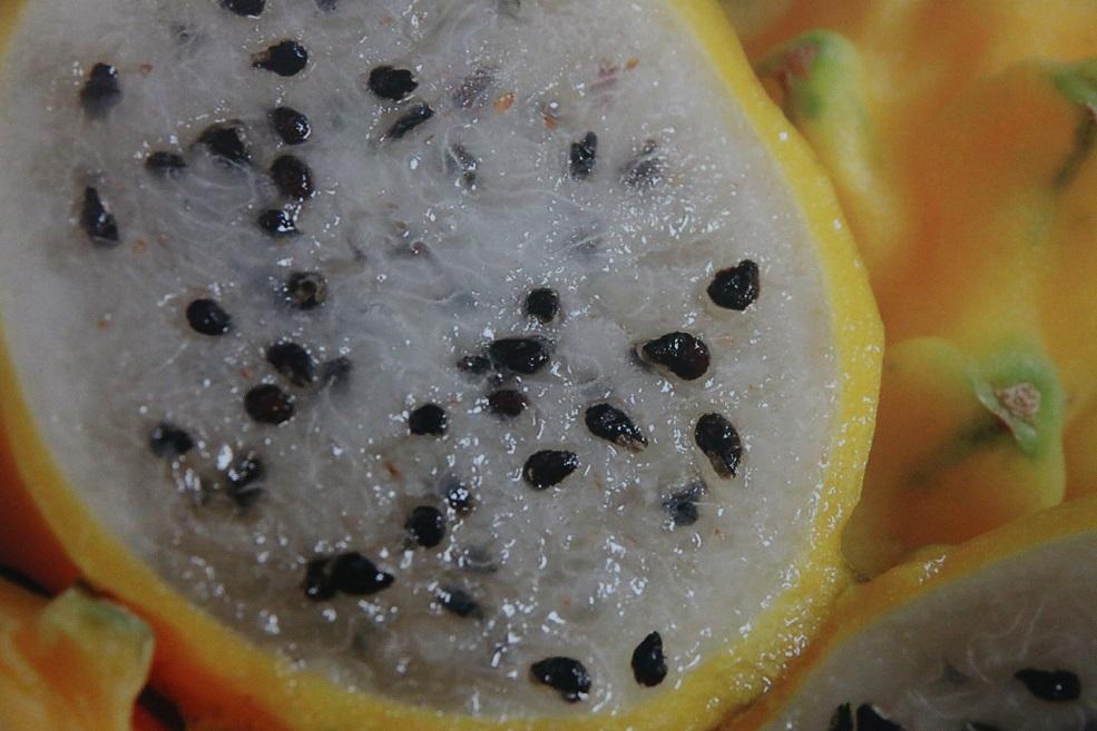 Ecuadorian dragon fruit exporters gauge response from trials in U.S. market