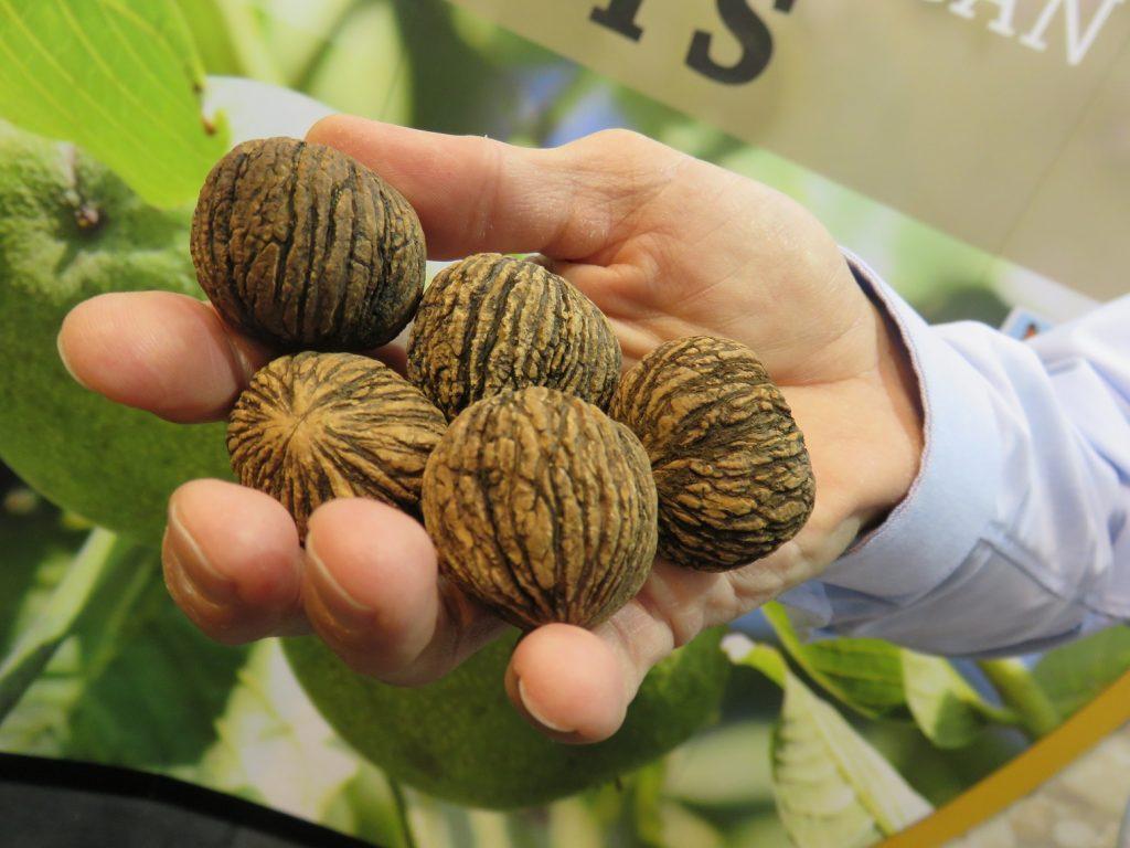 U.S.: Commercial black walnut production a