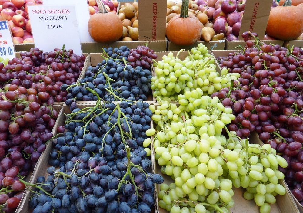 Global table grape production to rise despite EU losses