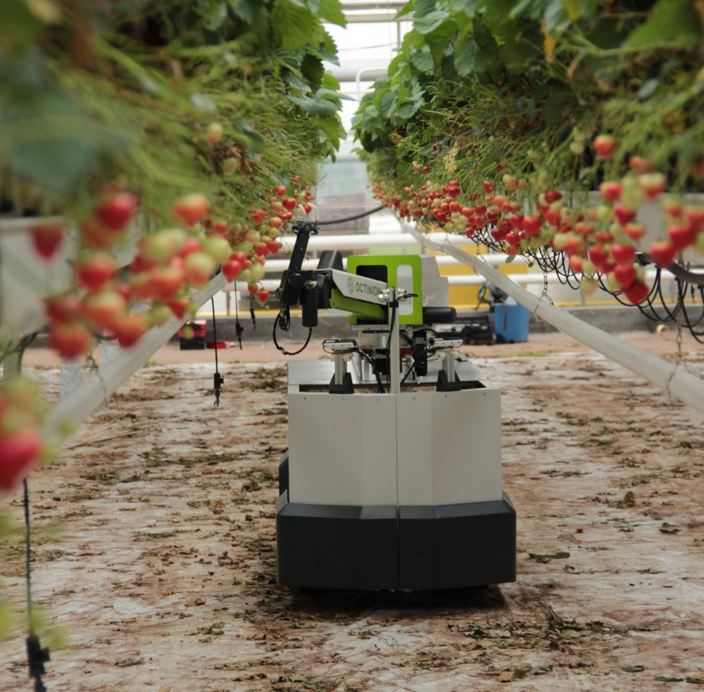 Octinion's strawberry-picking robot in world's first commercial launch
