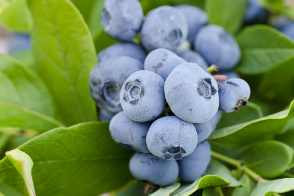Blueberries in Charts: Prices enter their jumpy phase