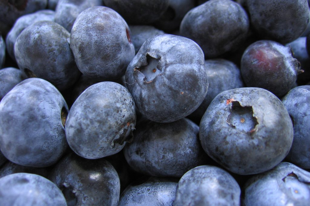 Chilean blueberry industry forecasts stable export volumes