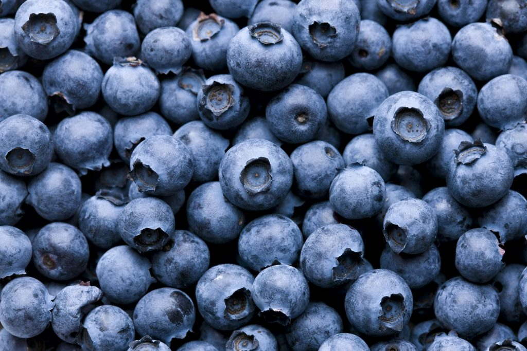 Blueberries in Charts: A look at Chile's export forecast in turbulent waters