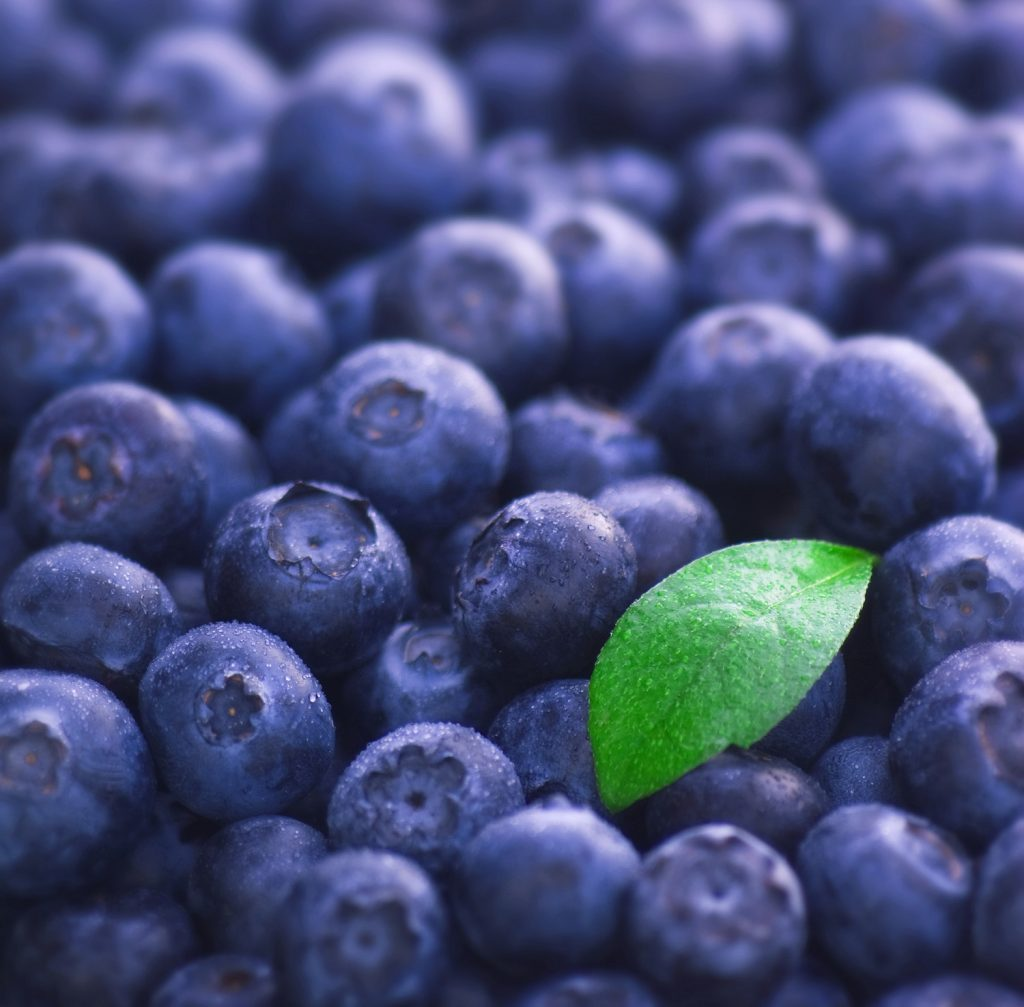Blueberries in Charts: How does Peru's expected big increase play into its export strategy?