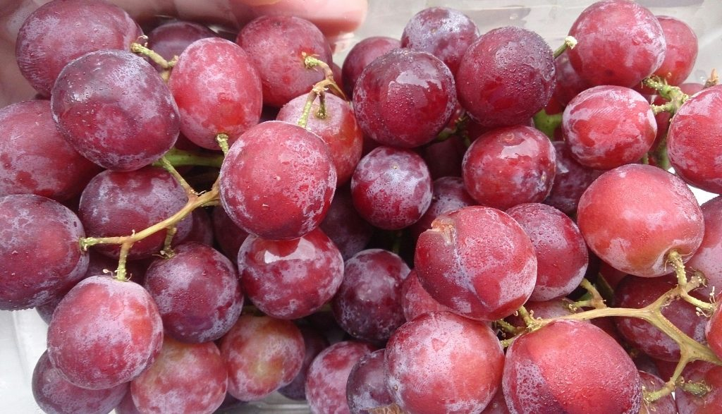 Australian table grape growers losing millions in potential extension of trade war - report