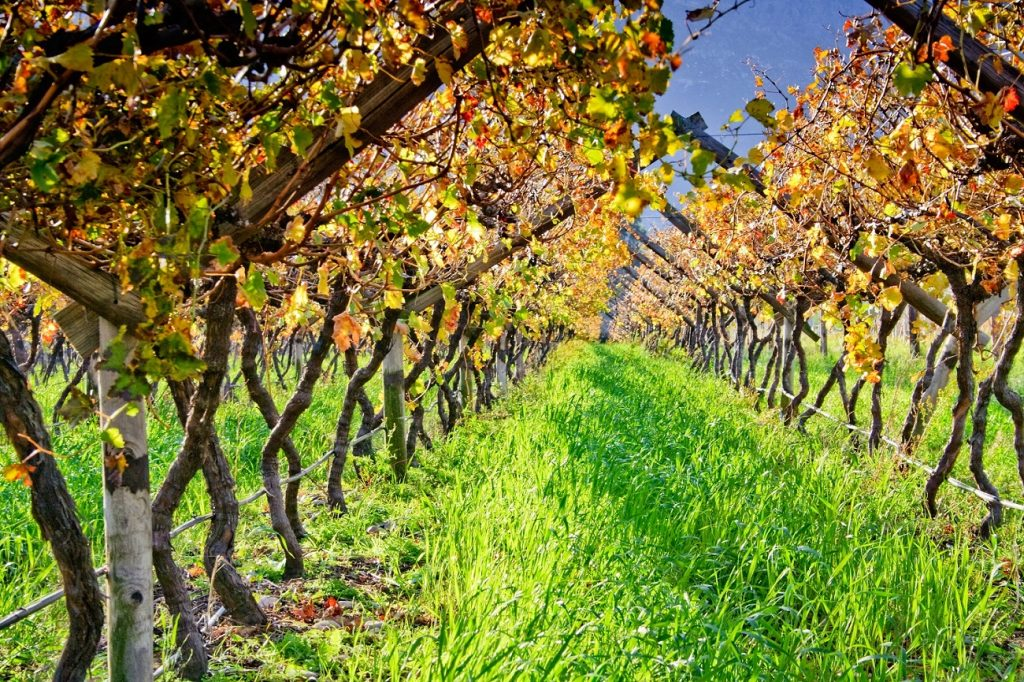 Q&A with John Pandol: The changing table grape industry