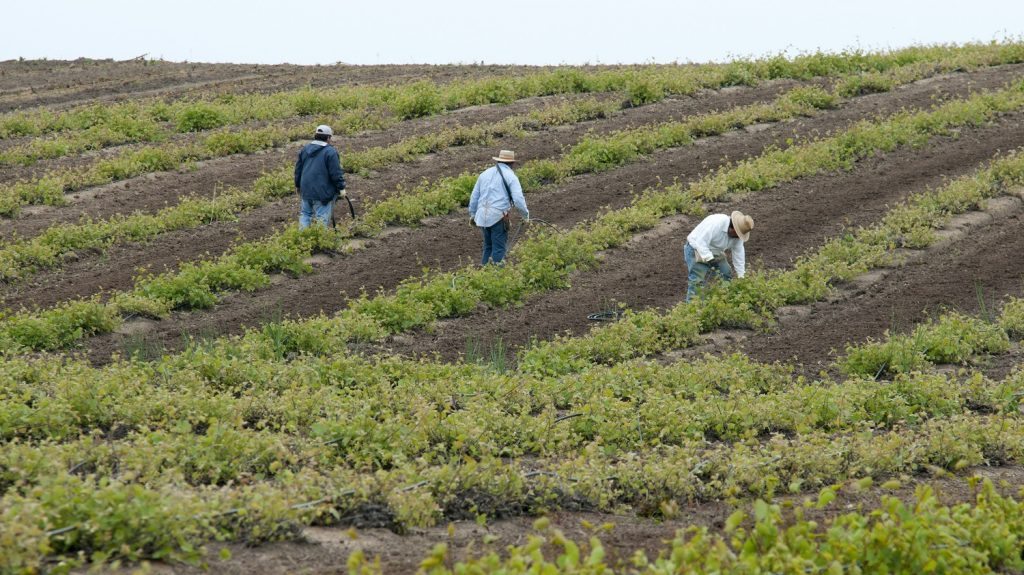 U.S. decision to increase farmworker visa processing praised by industry groups