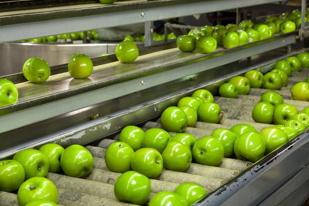European apple market: