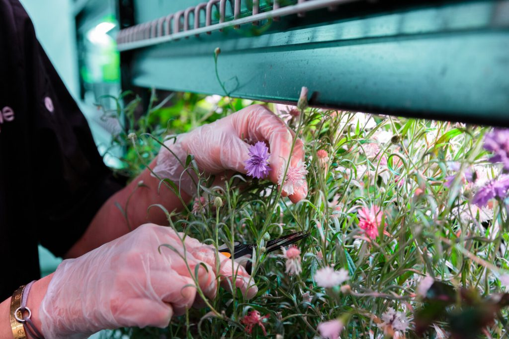 How NYC urban farms are pivoting to stay in business during Covid-19