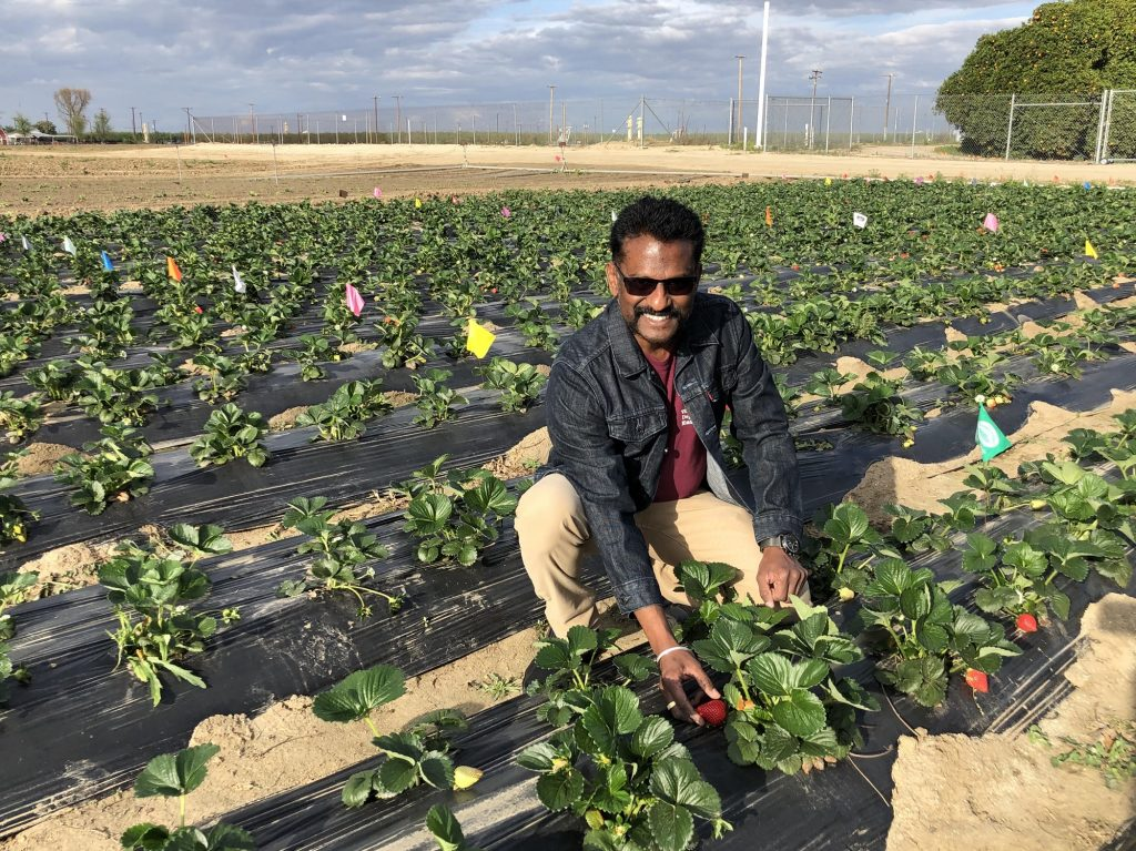 Is Integrated Pest Management the future of agriculture?