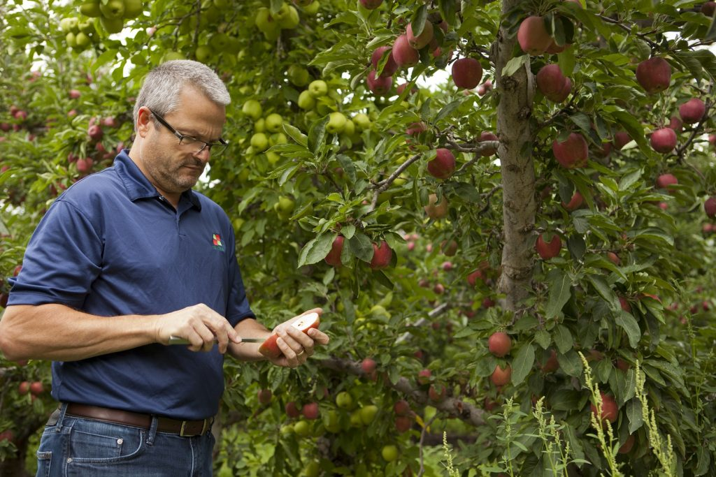 Apple orchards worldwide turn to Harvista in time of need