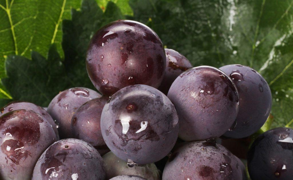 Peruvian grape and mango seasons threatened by possible trucker strike in Piura