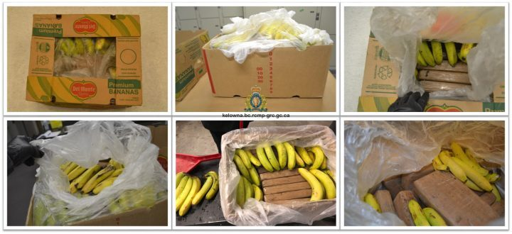 Cocaine-containing bananas shipped to Canadian grocery stores in botched operation
