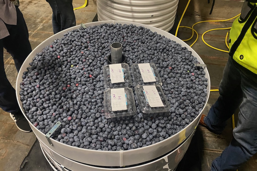 RipeLocker containers hold blueberries eight weeks