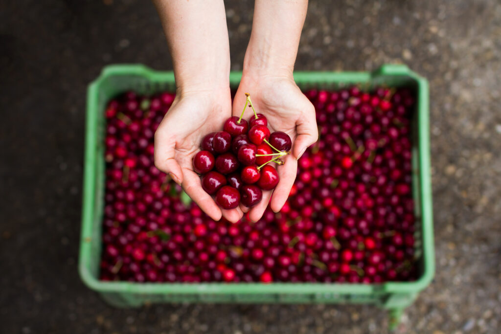 Chile closes complex cherry season with a call for future industry unity
