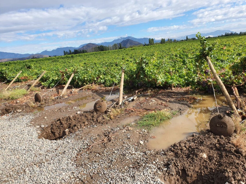 Chile: Weather-related fruit losses pegged at $150M