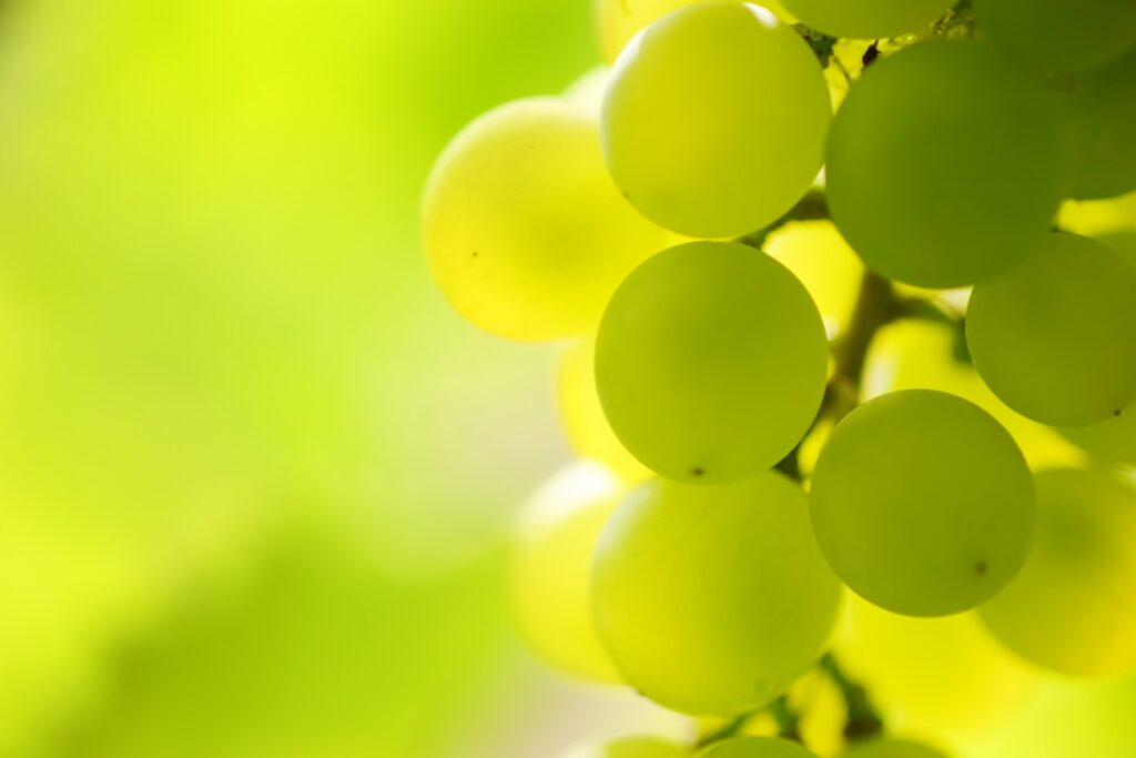 Chile: Late-season red grapes spared in mixed picture for rain-hit crops