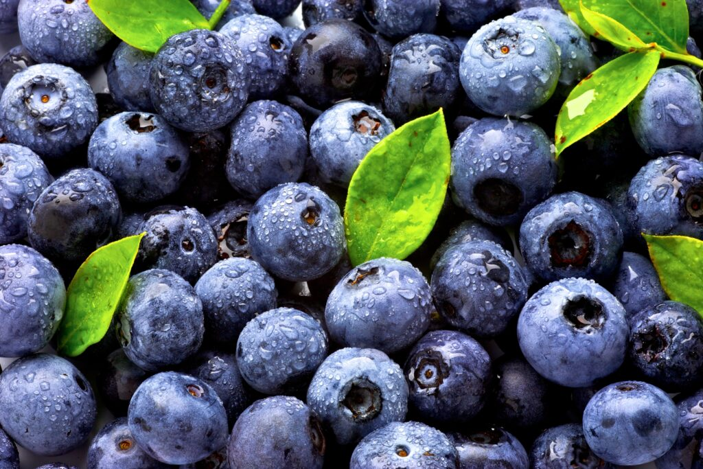 Agronometrics in Charts: Florida blueberries begin season with higher prices than last two years