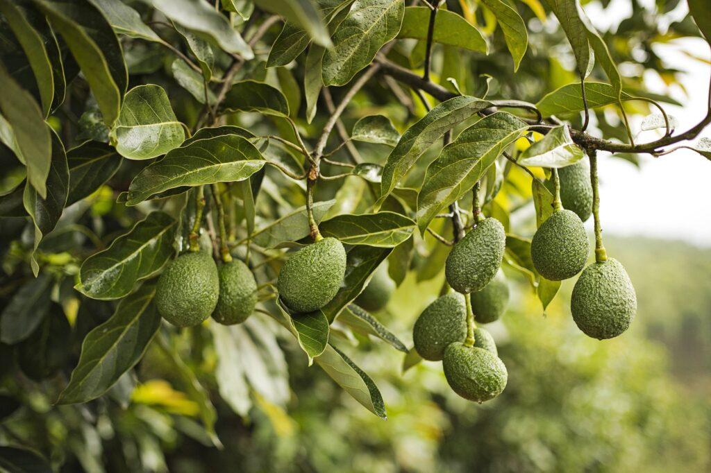 Westfalia Fruit Group celebrates founder's 150th birthday