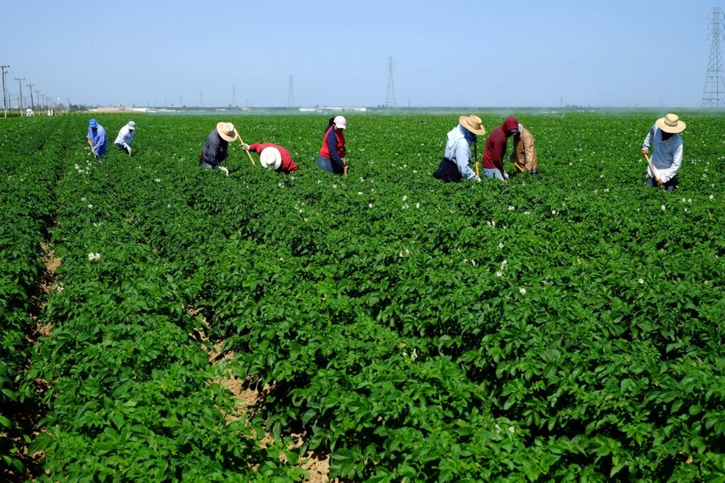 U.S. industry groups welcome reintroduction of Farm Workforce Modernization Act