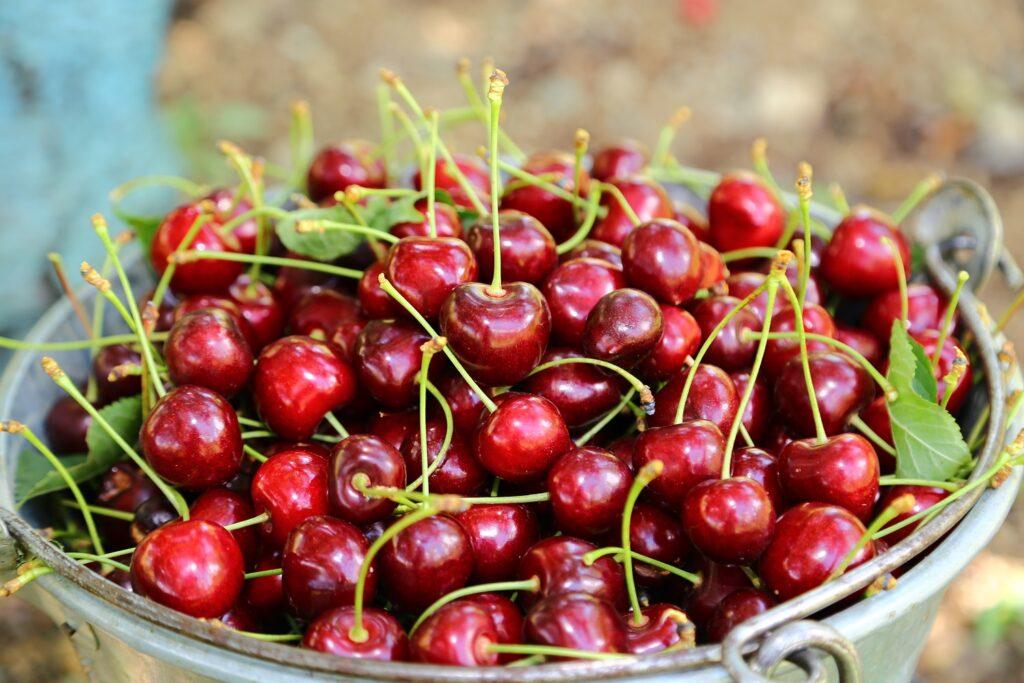 China: Cherry import season was