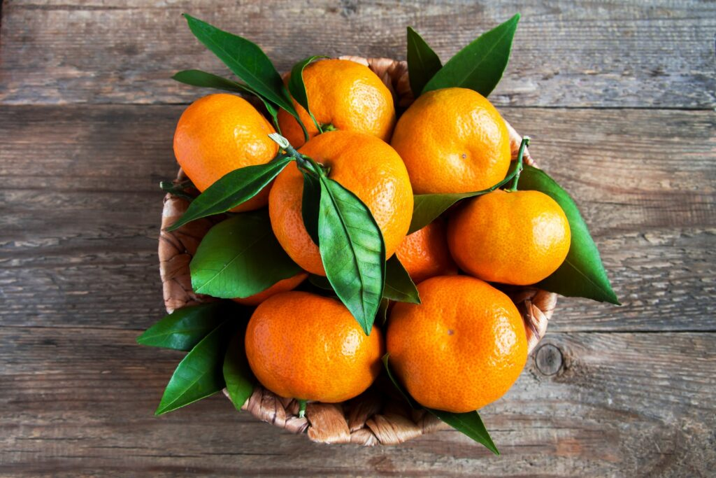 South Africa forecasts another record citrus export year, driven by explosive late mandarin growth