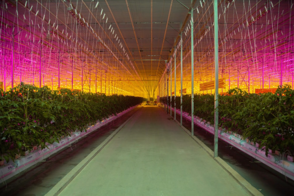 Israel's Netafim to acquire Dutch greenhouse company