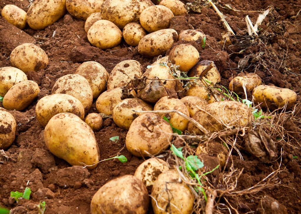 Tesco trials unwashed potatoes to help cut down on food waste