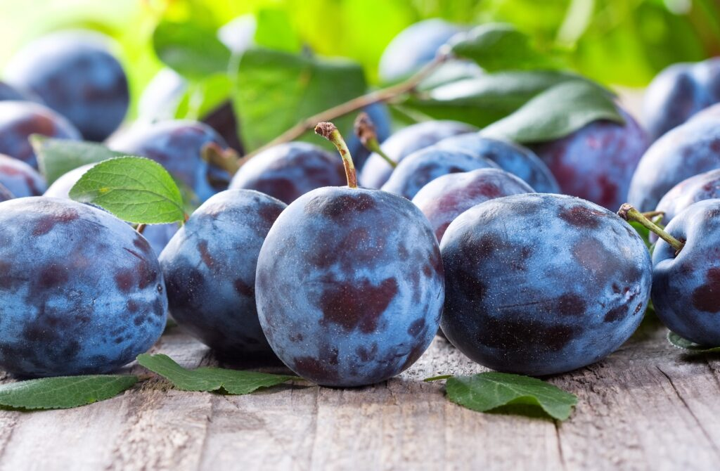 U.S. tightens import rules for Chilean plums after pest interceptions