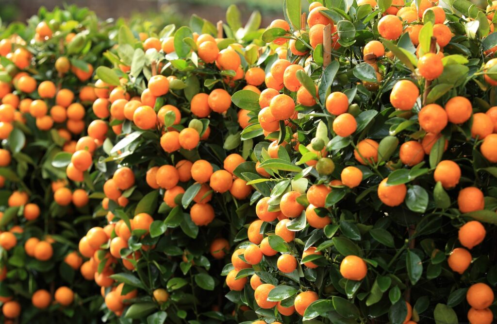 South African citrus: Freight capacity and infrastructure may be