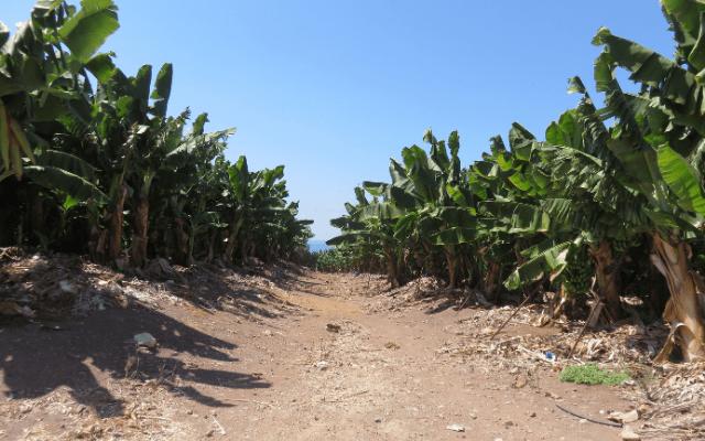 Chiquita banana worker strike causes immense losses in Panama